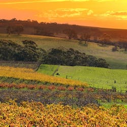 Luxury Barossa Valley Holidays