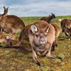 Luxury Kangaroo Island Holidays