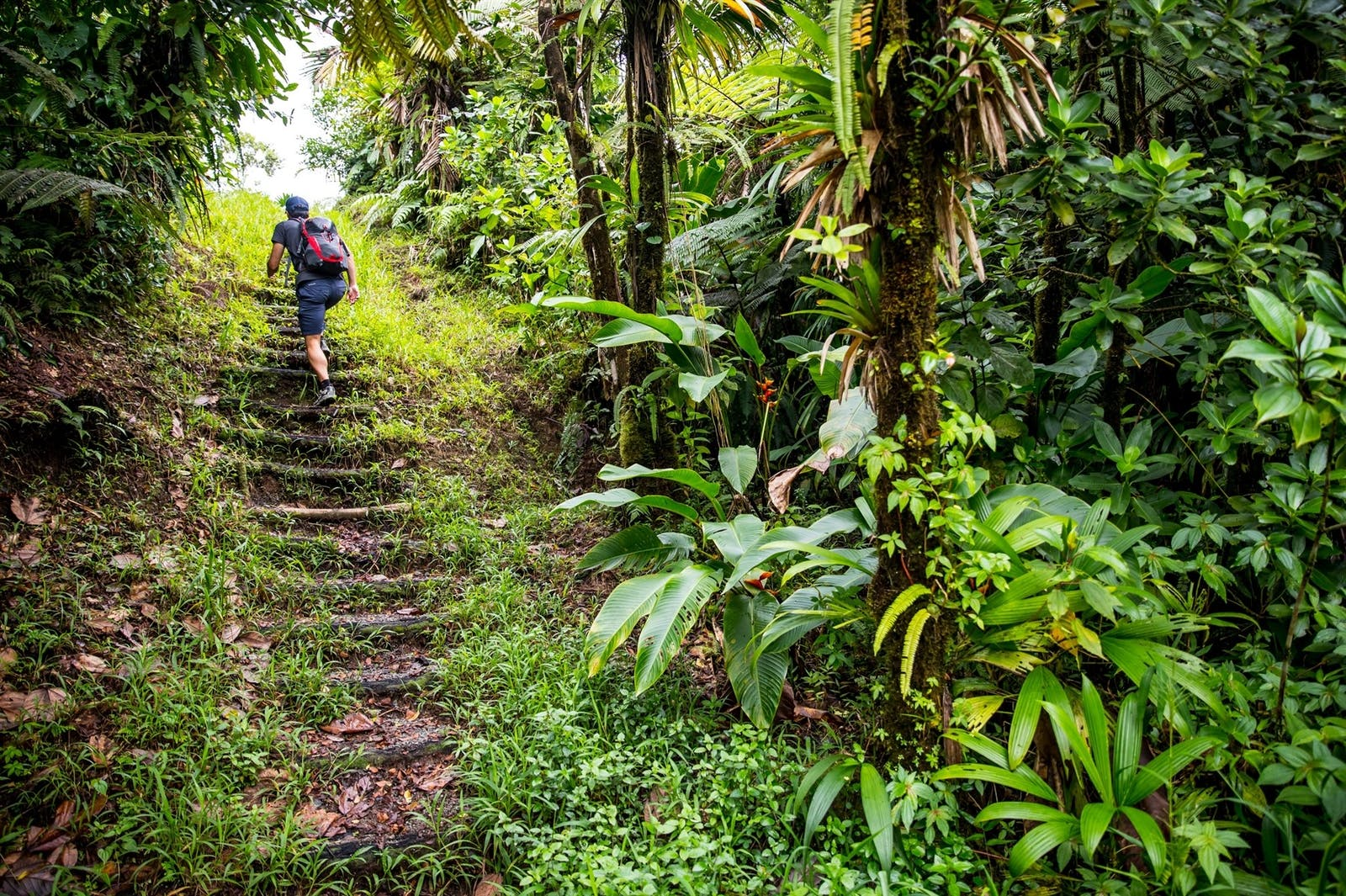 Hiking, Fort Young, Dominica