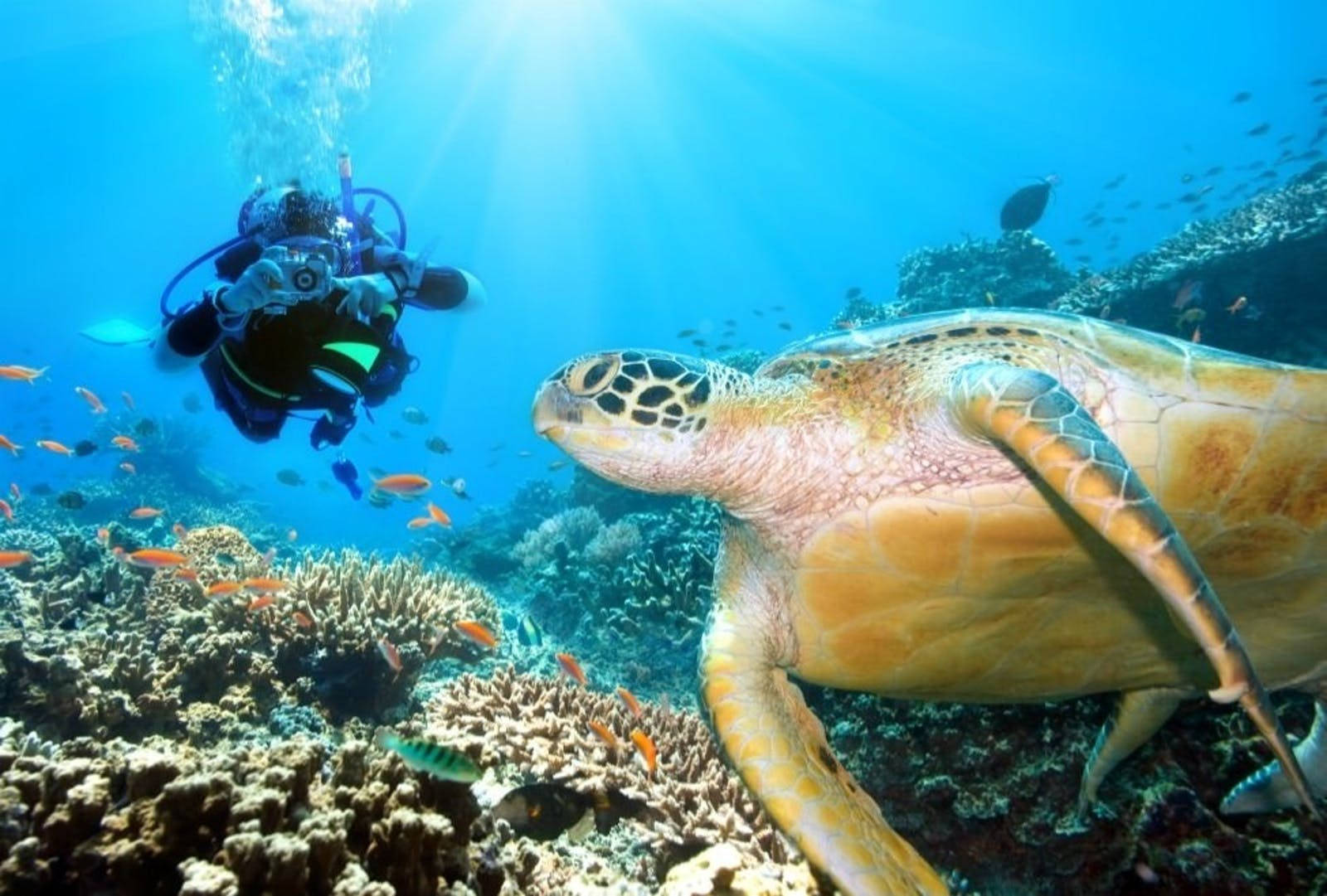 Turtle Diving at Six Senses Fiji