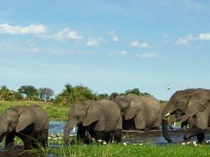 Elephants at Duba Plains Camp, Bostwana