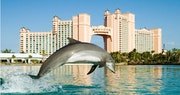 Enjoy a breathtaking collection of marine exhibits at Atlantis, Bahamas