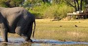 Elephant at Zarafa Camp, Bostwana