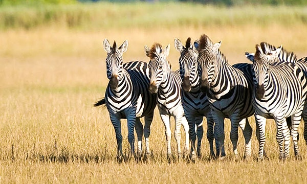 Botswana With Rainbow Tours