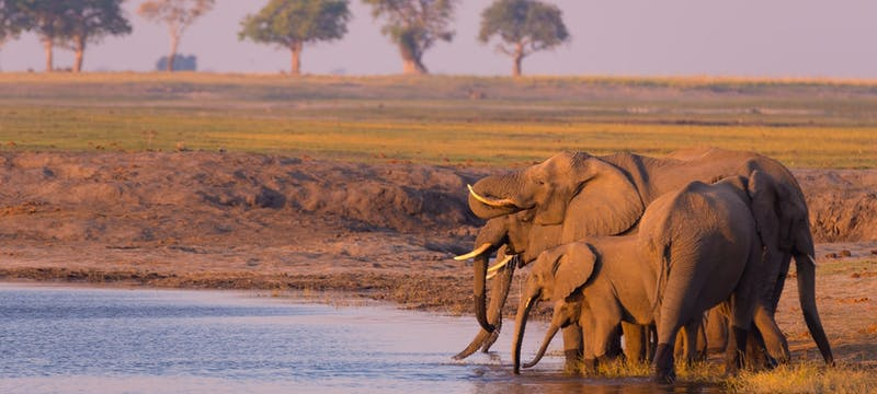 Chobe river in n South Africa, tour holidays