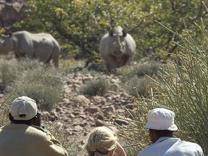 Rhino watching at Desert Rhino Camp