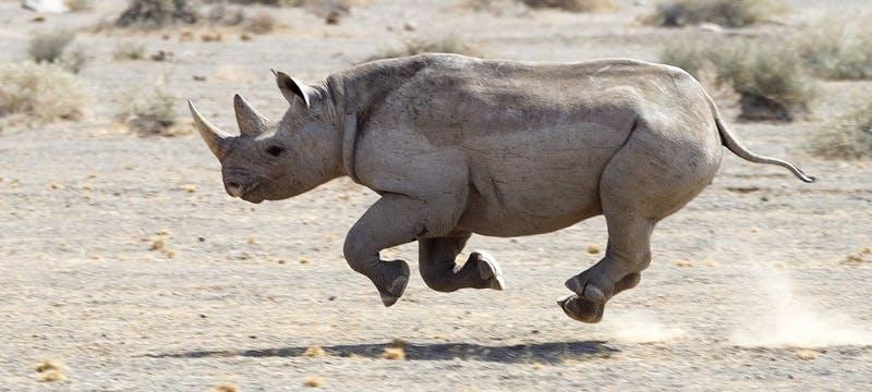 Rhino at Doro Nawas
