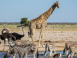Etosha National Park on a Namibia Tailor-made Self-drive Holiday