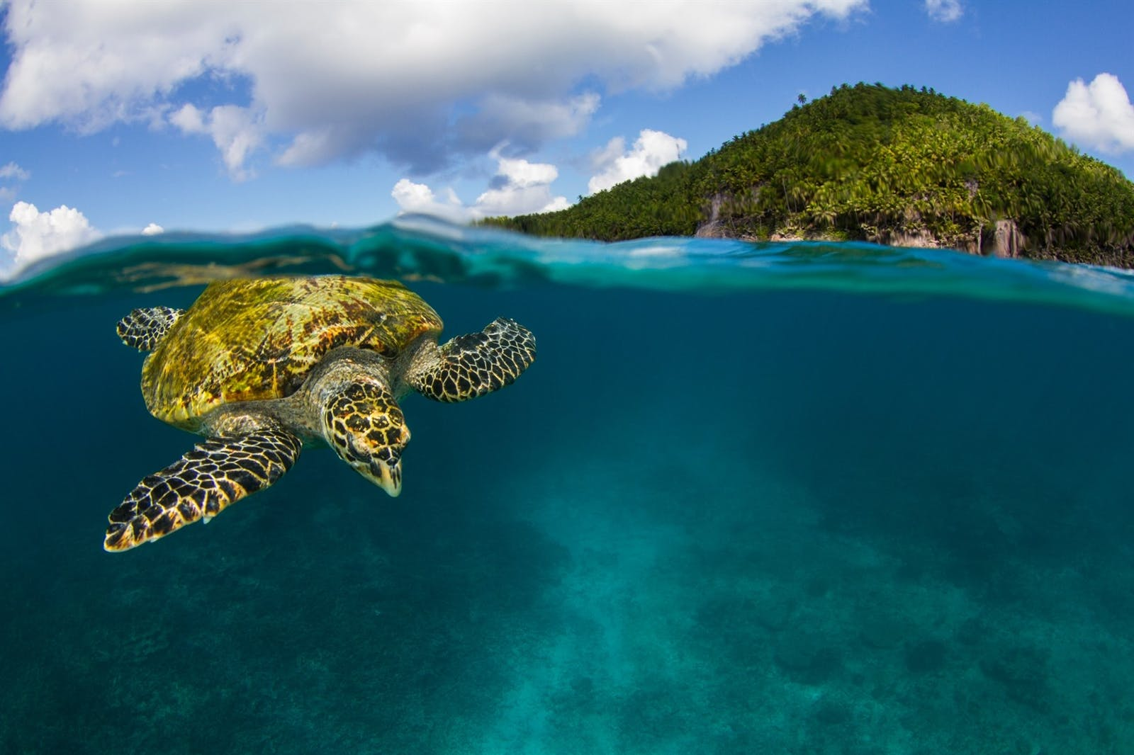 Turtle at Fregate Island Private, Seychelles, by Joe Daniels