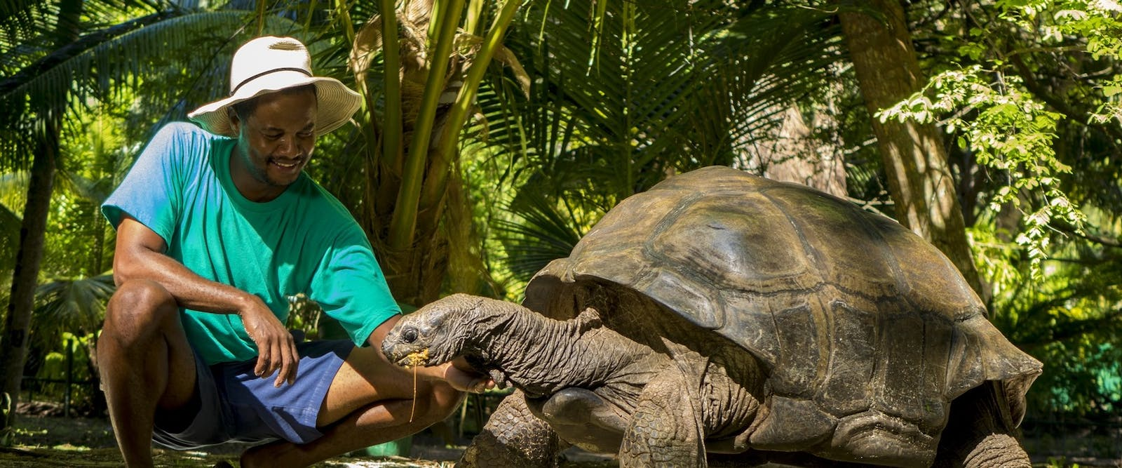 Giant Tortoise at Denis Private Island, Seychelles