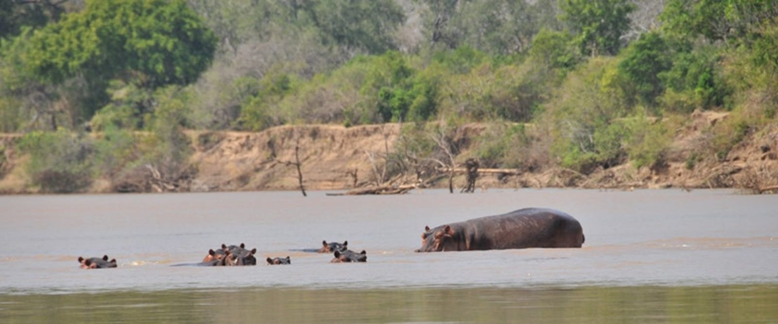 Hippos in the river at Serena Mivumo River Lodge