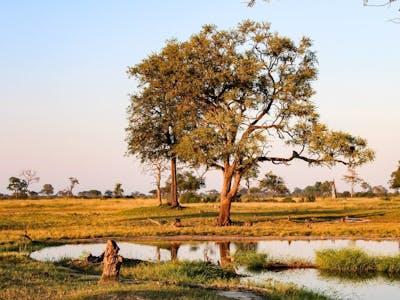 Hwange National Park - Zimbabwe