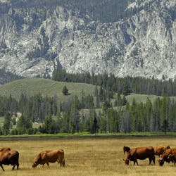 Luxury Idaho ranch holidays