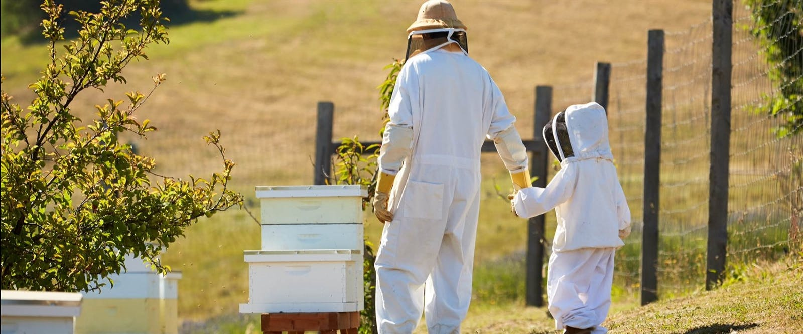 Beekeepers Experience at Carmel Valley Ranch, California