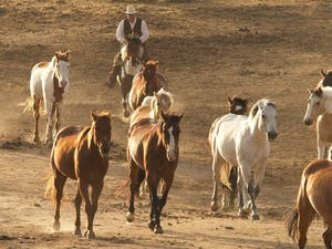 Horses at Colorado Cattle Company