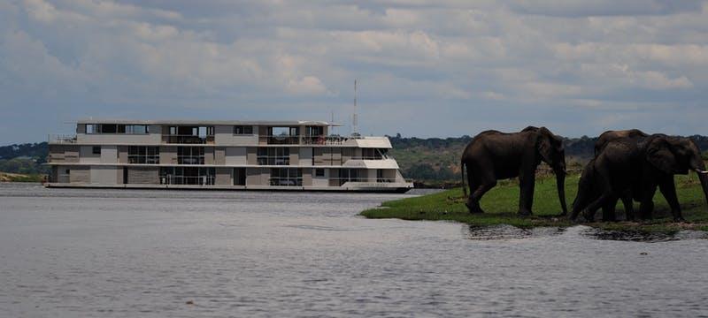 Elephant viewing on Zambezi Queen