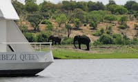 Elephant viewing on Zambezi Queen