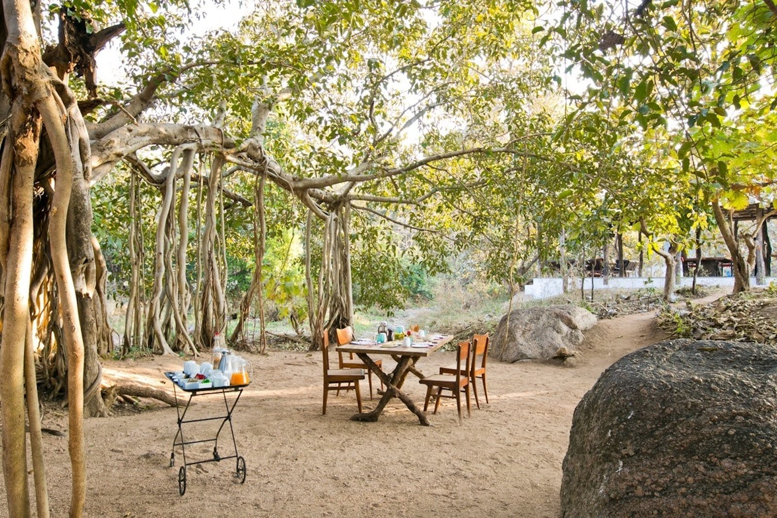jamtara wilderness camp banyan tree dining