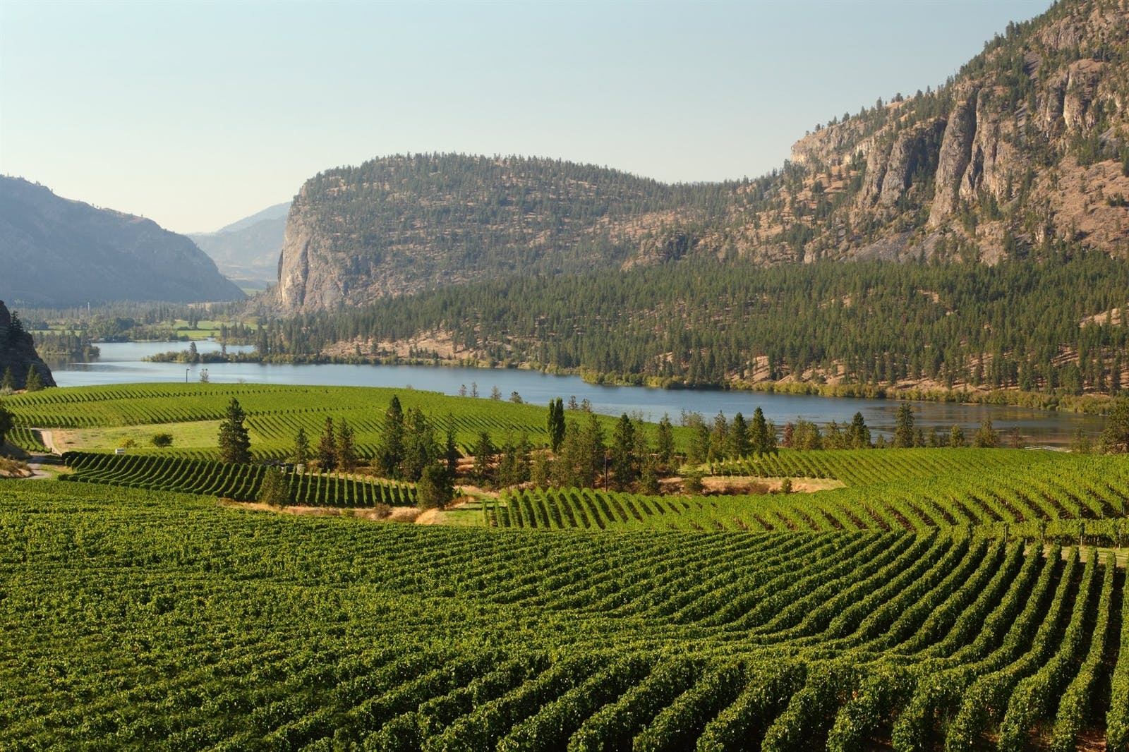 okanagan valley vineyards british columbia