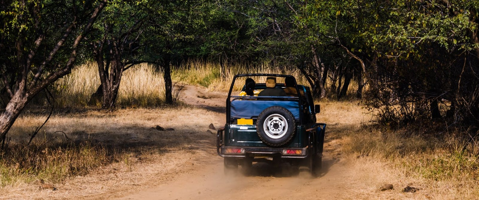Jeep Game Drive at Ranthambore National Park