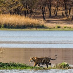 Ranthambore National Park Luxury Holidays
