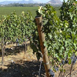 The Central Valley and Wineries Holidays