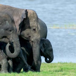 minneriya elephant gathering tour, Sri Lanka, Indian Ocean