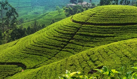 Luxury Tea Country Holidays