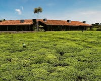 Nyungwe House, a Partner Hotel of One&Only 3