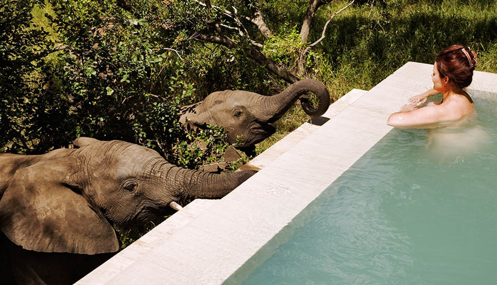 Elephants/Pool at Royal Malewane Kruger National Park