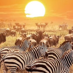 Natural Wonders of Tanzania With &Beyond