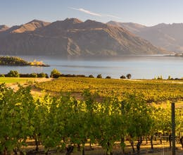 New Zealand Wine Trail