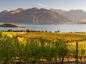 New Zealand Wine Tour