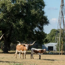Luxury Ranch holidays in Texas
