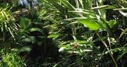 Tropical gardens surrounding Pousada do Ouro, Brazil