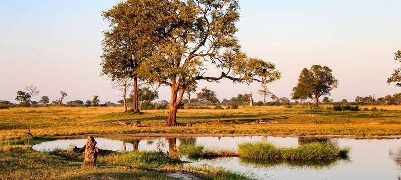 Hwange National Park in Hwange National Park