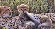 Widlife at &Beyond Grumeti Serengeti Tented Camp