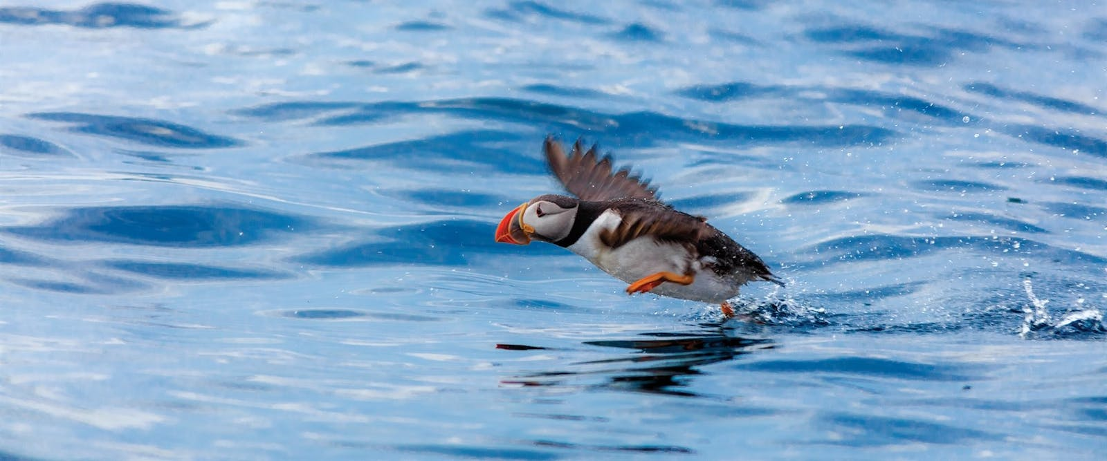 witless bay whale watching puffins