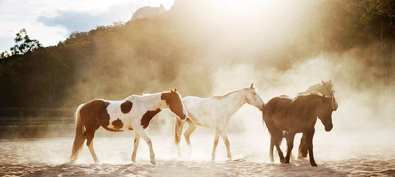 Horses at Emirates One&Only Wolgan Valley, Australia