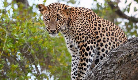 Luxury Yala National Park Holidays