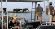 Game viewing, Zambezi Queen