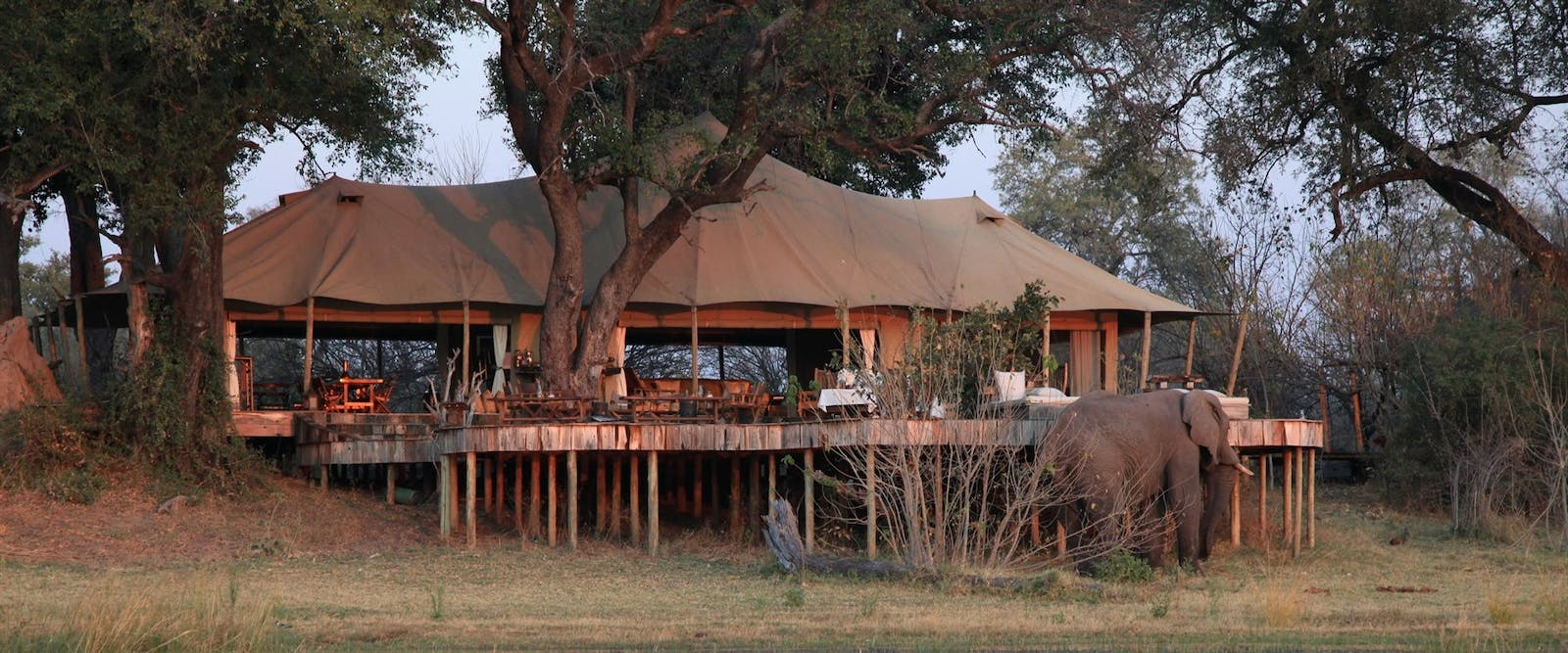 Elephants at  at Zarafa Camp