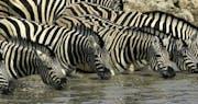 Wildlife at Little Ongava Lodge